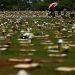 Dia de Finados no cemitério Campo da esperança em Brasília